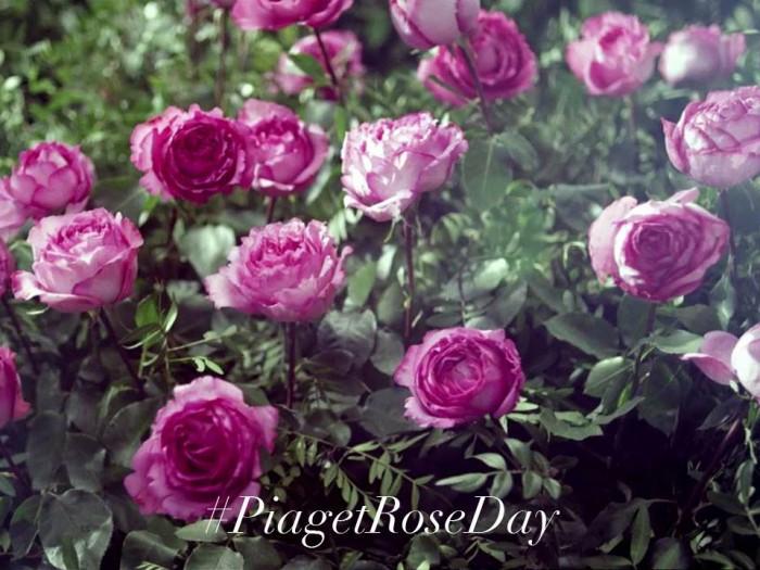 Piaget Rose Day : Piaget célèbre la rose