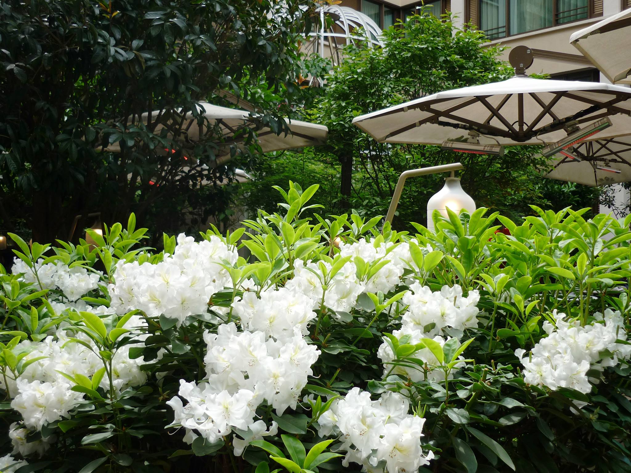 jardin fleuri mandarin oriental paris