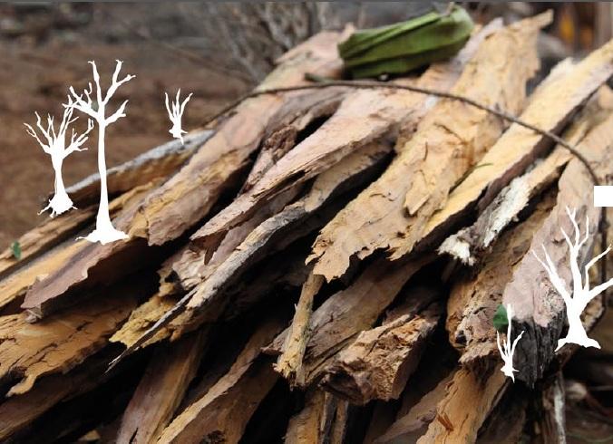 ylang-ylang bois de chauffe