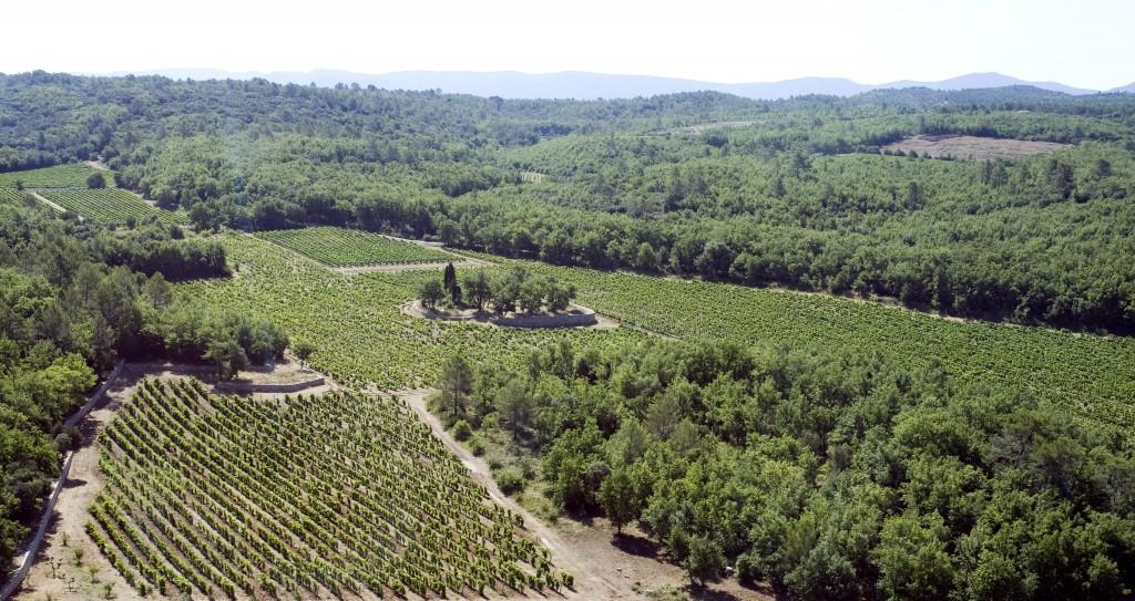 domaine vin olive _032