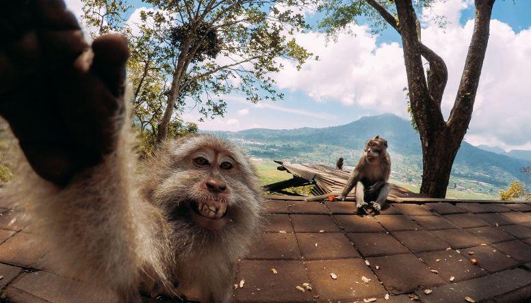 High5 little monkey by Dennis Garhammer