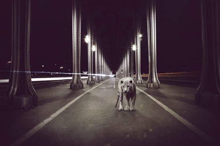 By Leon phototigre